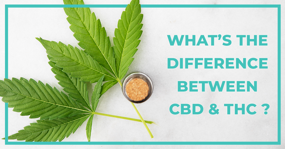 Differences of CBD and THC