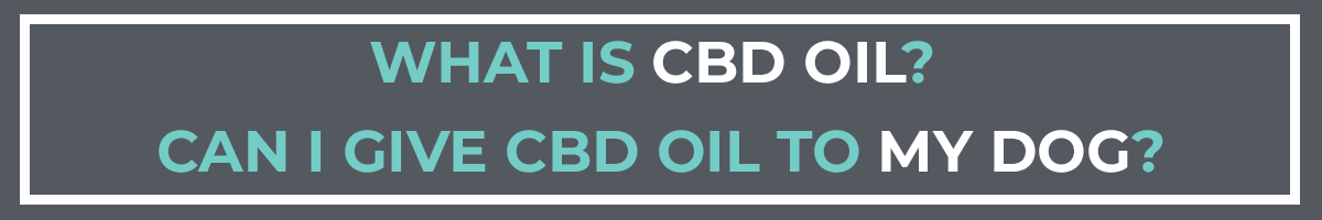 What is Cbd Oil? Can I give CBD oil to my dog?